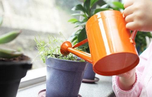 Медленный рост растений