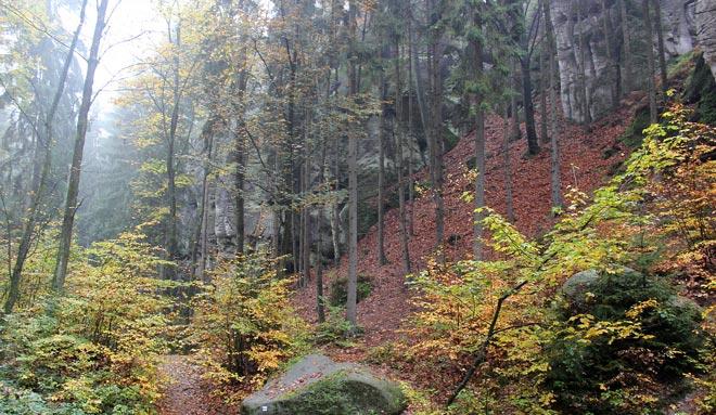 Летейский лес