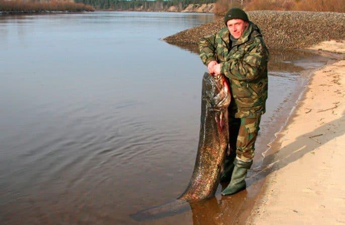 Сом из Беларуси
