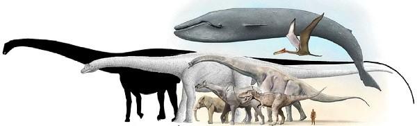 брхаткайозавр
