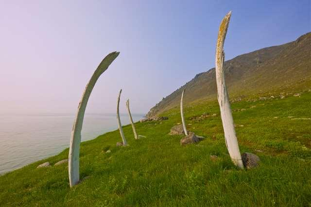 Мистика Китовой аллеи