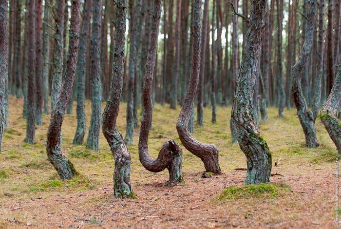 Жуткие деревья танцующего леса