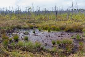 Мшинское болото